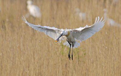 Birdwatching on Texel